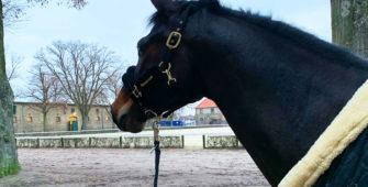 Pferd Licorne, mit dem Anna Jung die Meisterprüfung absolivert